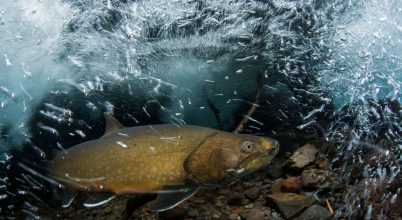 Kritikus állapotban vannak az édesvízi halak