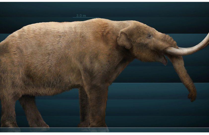 Nem az ember okozhatta Észak-Amerika jégkori megafaunája kihalását