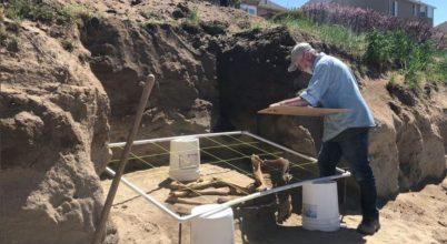 Csak pár száz éves a jégkorinak hitt ló csontváza