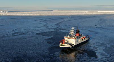 Nagy a nyüzsgés az antarktiszi tengerfenéken