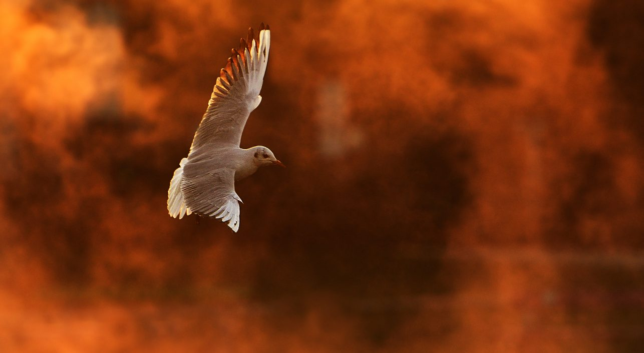 A nap képe: Tűzön-vízen át