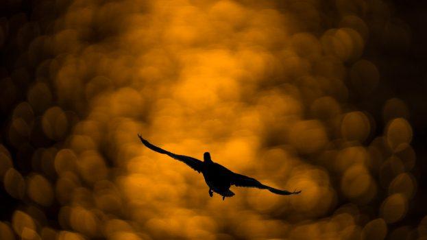 A nap képe: Fordulás a kifutópályára!