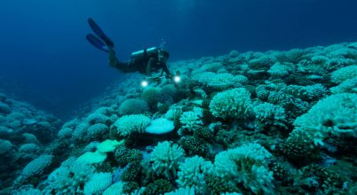 Korallfajokat számláltak a Csendes-óceánban