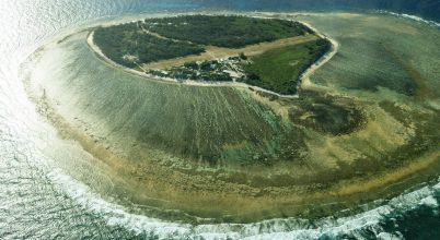 Albínó teknős jött világra a Nagy-Korallzátony egyik szigetén