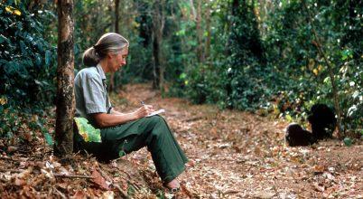 Jane Goodall optimista