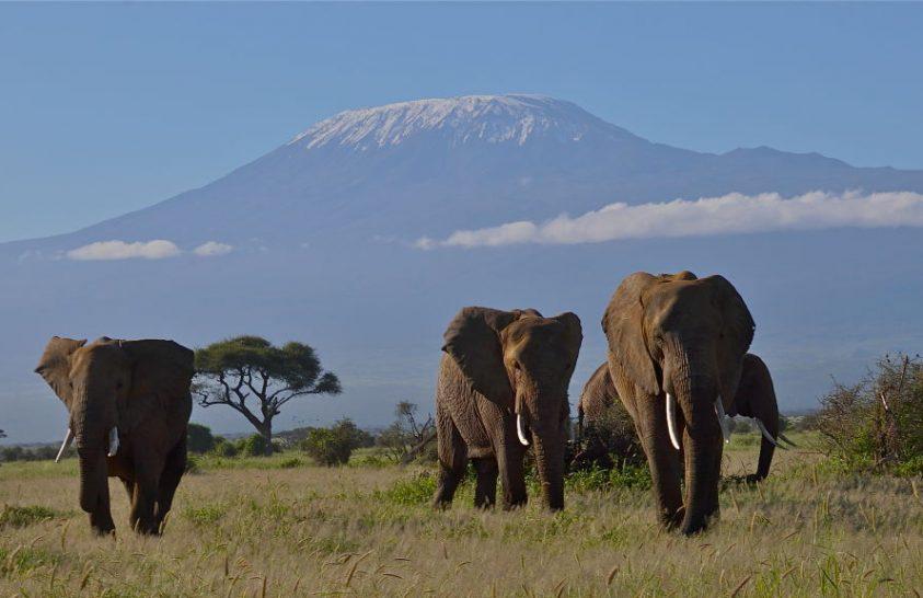 Új fenyegetés leselkedik a kenyai elefántokra