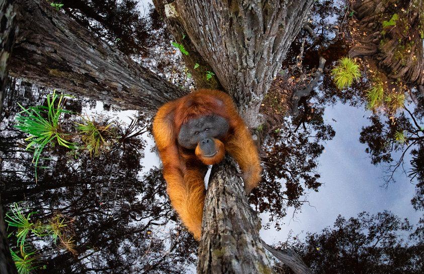 Kihirdették a természetfotó világpályázat 2020-as legjobb képeit