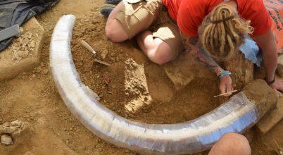 Magyar régészek különleges leletre bukkantak Ausztriában