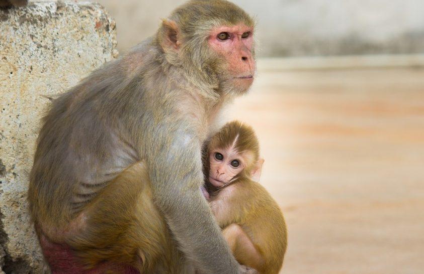 Hozzánk hasonlóan látják a világot a majmok