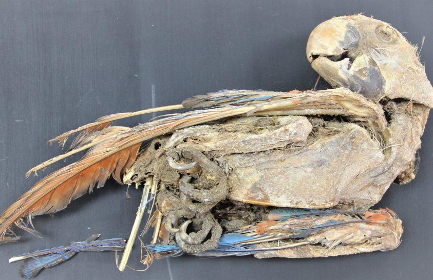 Hogyan kerültek mumifikálódott papagájok a sivatagba?