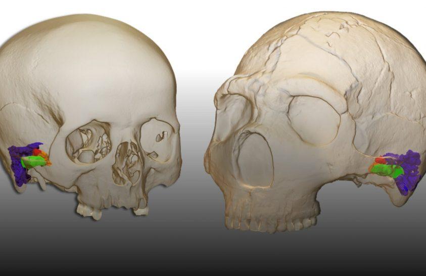 Hozzánk hasonlóan beszélhettek a neandervölgyiek