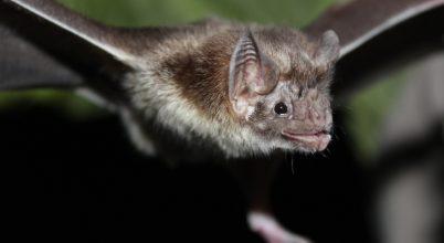 Sok állatfaj ösztönösen távolságtartó, ha beteg van köztük