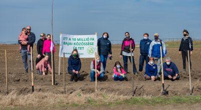 Már 100 ezer fát ültettek el!