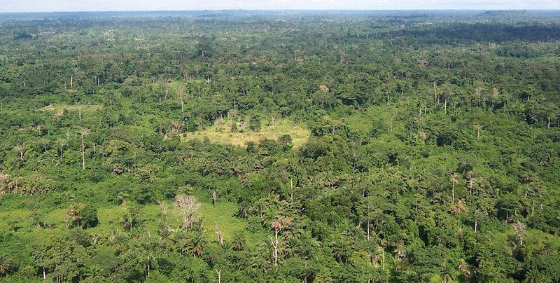 Tovább fogy a trópusokon az őserdő