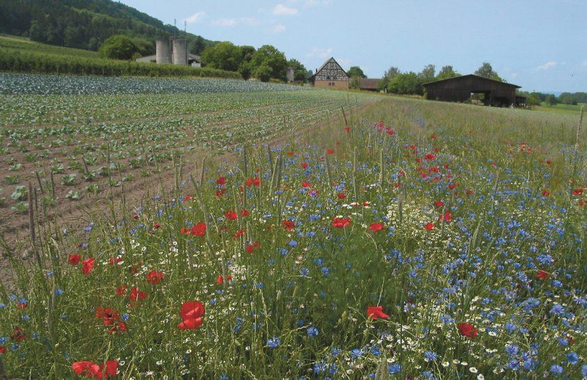 Virágos talajtakarókkal a biológiai sokszínűségért