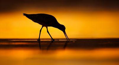 Ezekből kerülnek majd ki 2021-ben a legjobb madárfotók