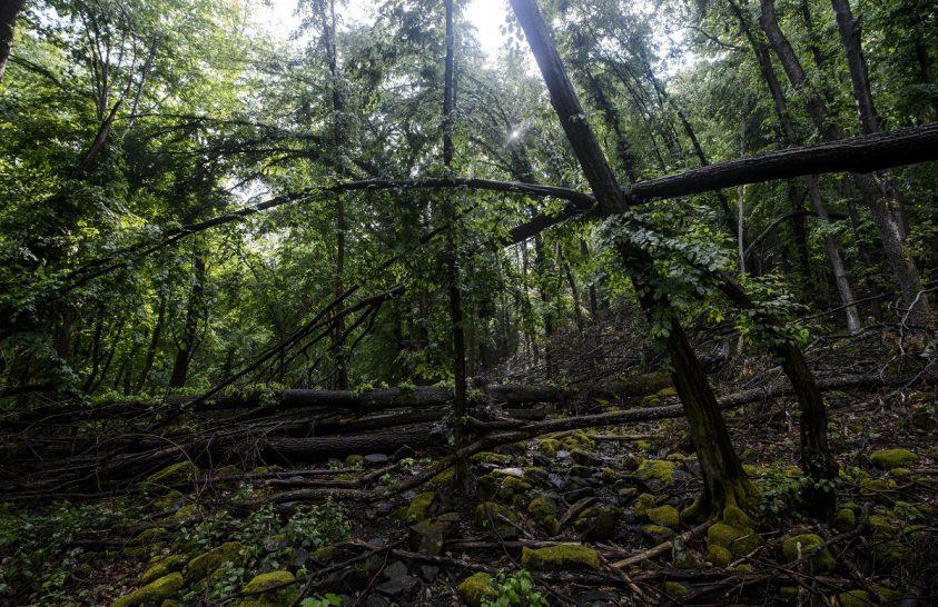 Őserdők és őslápok különleges világa hazánkban
