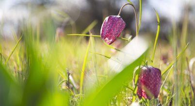 Tavaszt hozó virágok