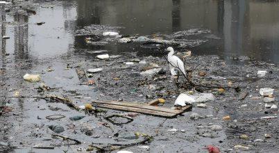 Visszatértek a vadállatok Sao Paulo megtisztított folyójába