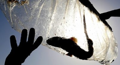 Tengeri állatok szabadon engedése a Perzsa-öbölben