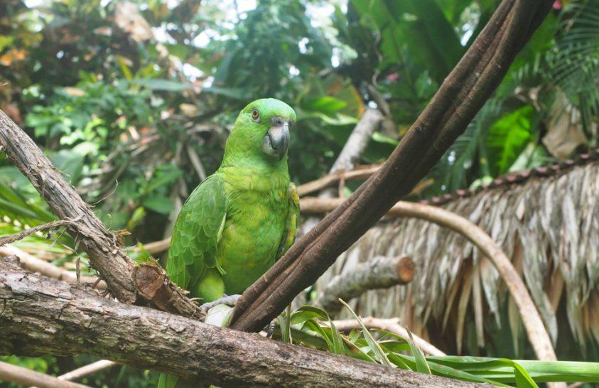 Állatmenhelyek lakói Costa Ricában
