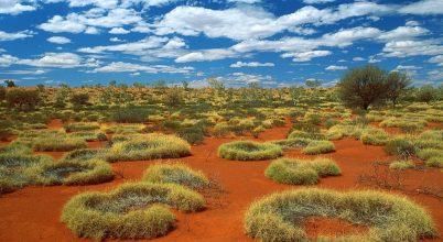 Hogyan keletkeznek az ausztrál tündérkörök?