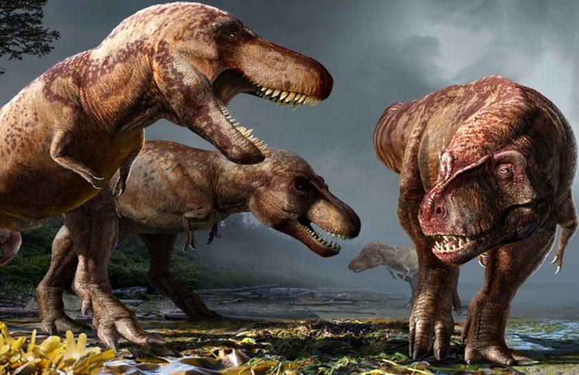 Vajon hány T. rex élt valaha?