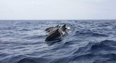 Egy delfin sosem felejti, ki az igaz barát