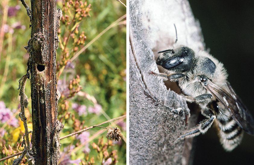 Méhlárvák dobolása ellenségeik megtévesztésére