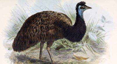 Kihalt madárfaj érintetlen tojására bukkantak