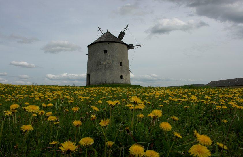 A nap képe: Pitypang, szélmalom, tavasz
