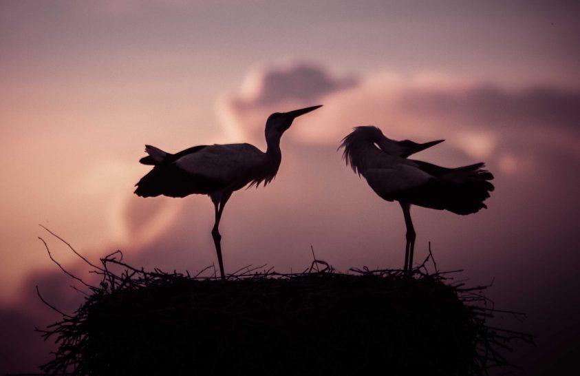 A nap képe: Alkonyi gólyanász