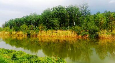 Mosoni-Duna az Aranyosszigeti dűlőnél