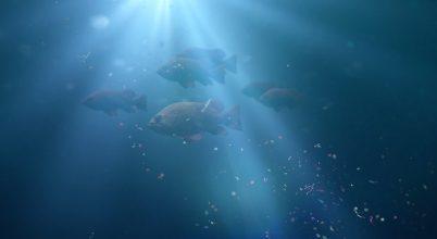 Hetven éve is kimutatható lett volna a halak szerveztetében a műanyag