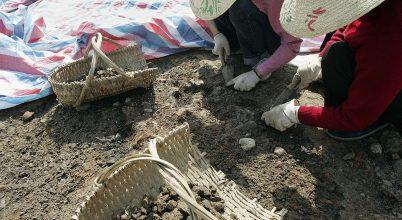 Ősi áldozati vermekre bukkantak Kínában