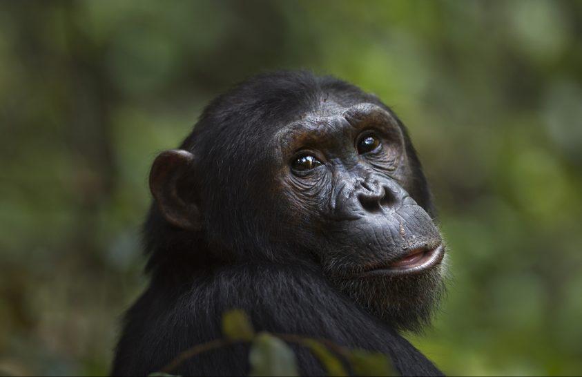 Az anyagcserét érintő mutáció segítette fajunk kialakulását