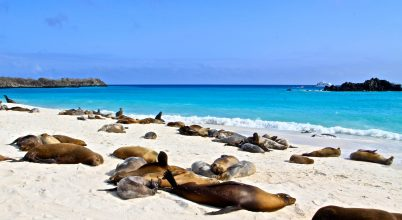 Anyagi támogatás a Galápagos-szigetek helyreállítására