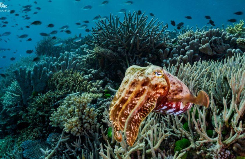 Veszélyben a korall