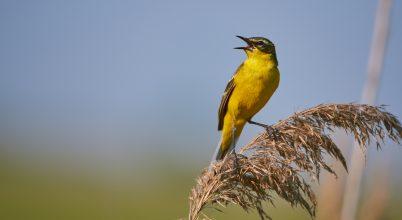 Mi a titka a madarak kifinomult hangjának?