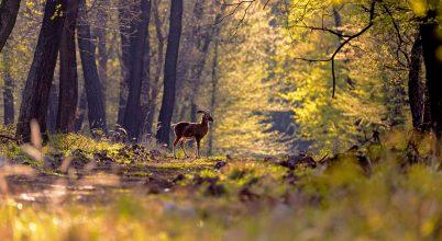 Ébred az erdő