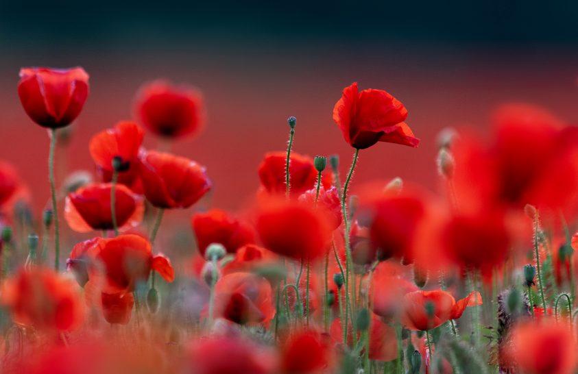 A nap képe: Csupa piros