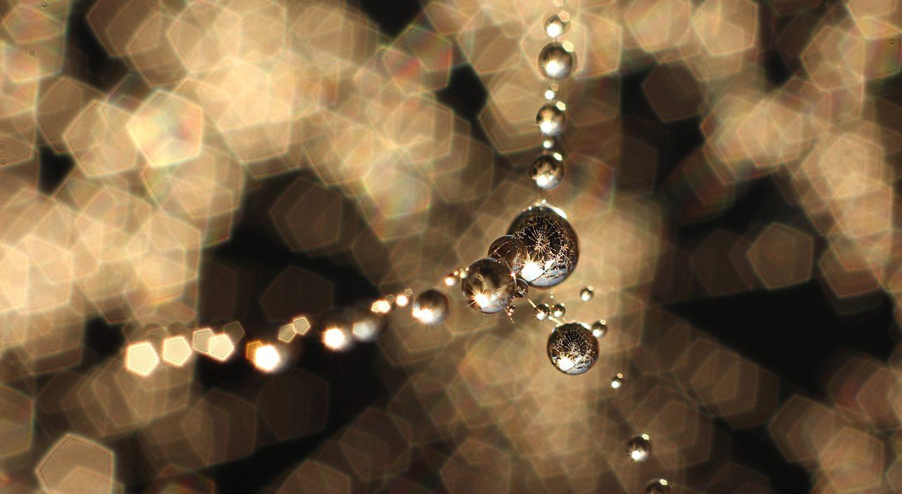 A nap képe: Aranyló pókháló