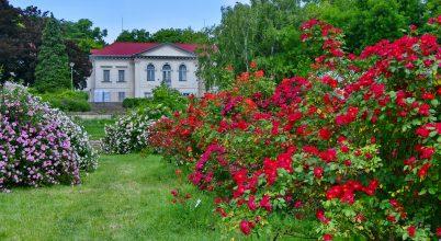 Rózsák kertje