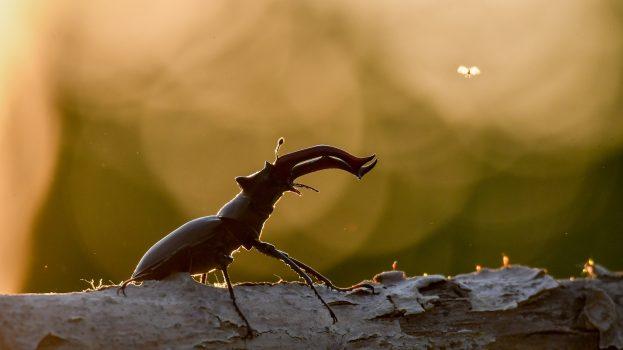 A nap képe: Szigetközi életkép