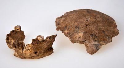 Ismeretlen ősi rokonunk csontjaira bukkantak
