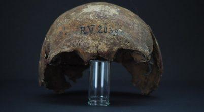 Megtalálták a pestist okozó baktérium legkorábbi törzsét