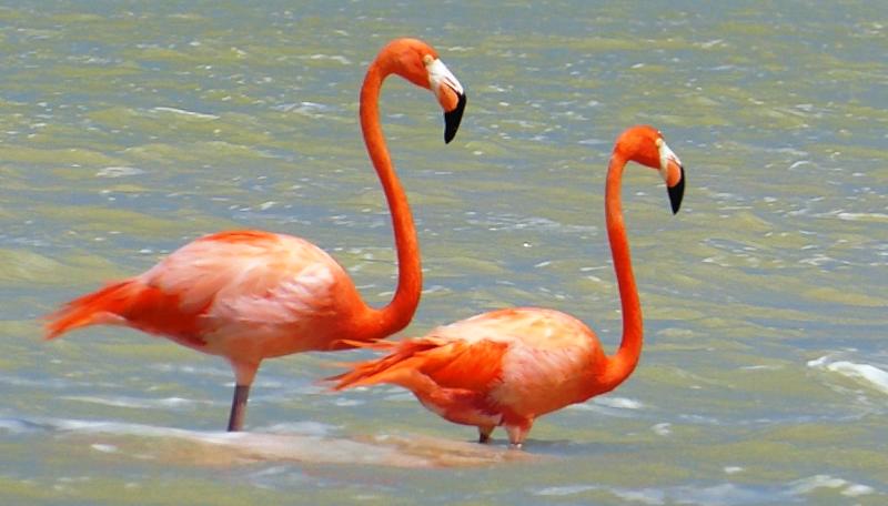 Élet a Yucatán-félszigeten – kalandozás a helyi állat- és növényvilágban II. rész