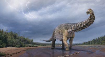 Ez volt Ausztrália legnagyobb dinoszaurusza