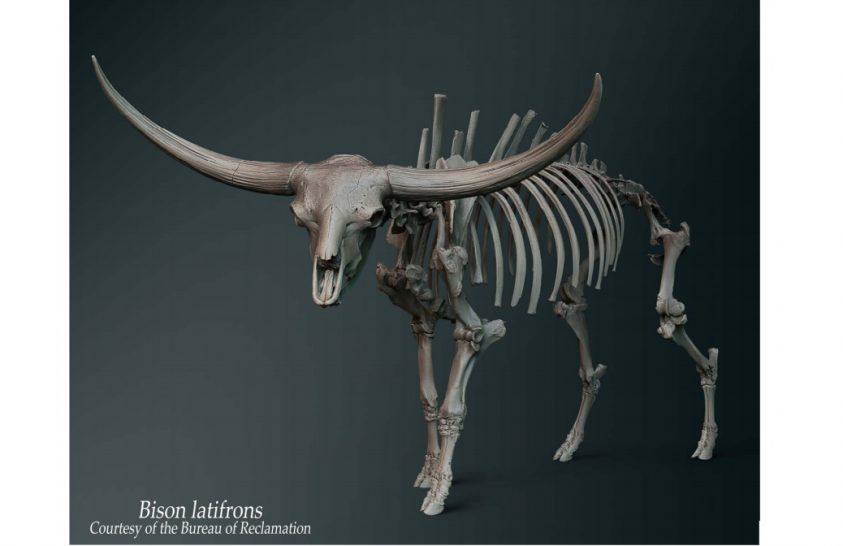3D-ben vizsgálható az egykor élt óriásbölény