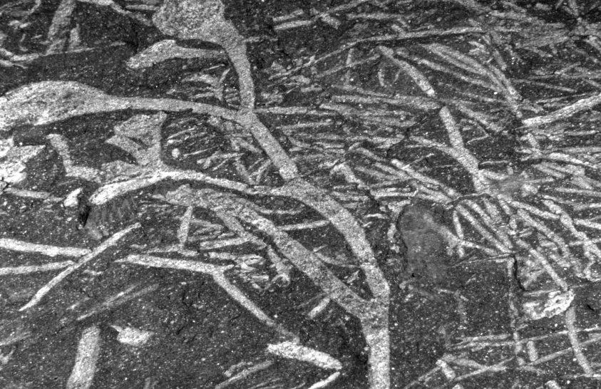 420 millió éves növényi maradványokat találtak